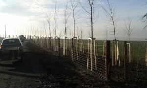 výsadba stromů a keřů